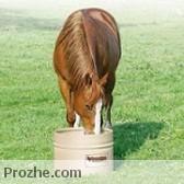 اسب و علوفه
